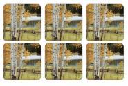 Birch Beauty - Untersetzer