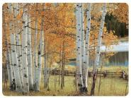 Birch Beauty - Tischsets 6er 23 x 30cm