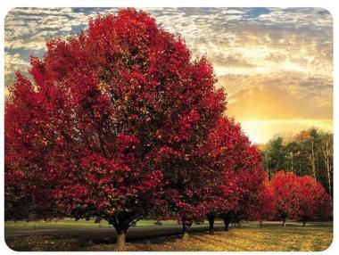 Crimson Trees - Tischsets