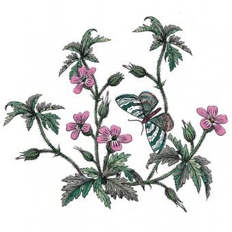 Kaffeetasse & Untere Botanic Garden - 0,2l Herb Robert