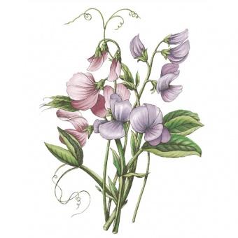 Speiseteller Botanic Garden - 25cm Sweet Pea